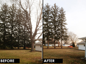 Before and after image of pruning.